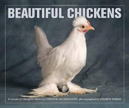 Beautiful Chickens Amazon De Christie Aschwanden