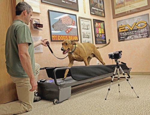 Dogtread Large Dog Treadmill