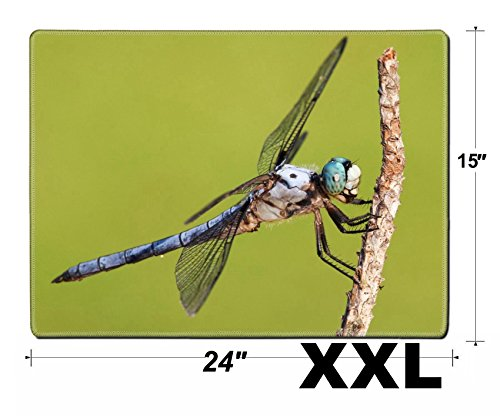 MSD Extra Large Mouse Pad XXL Extended Non-Slip Rubber Large Gaming Desk Mat Blue Eyed Dragonfly That is Covered with Hair Image 21453994 Customized Tablemats Stain