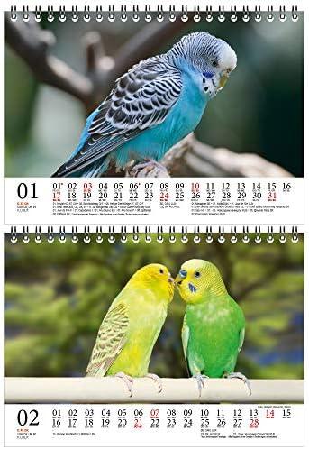 Wellensittichzauber DIN A5 Tischkalender für 2021 Wellensittiche - Geschenkset Inhalt: 1x Kalender, 1x Weihnachts- und 1x Grußkarte (insgesamt 3 Teile)