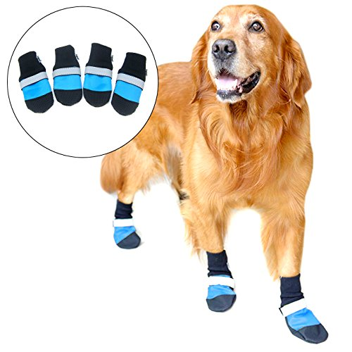 Boots Designer Dog (Alfie Pet by Petoga Couture - Dorian All Weather Set of 4 Dog Boots - Color Blue, Size: XL)