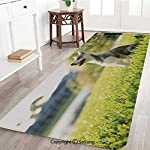Alaskan Malamute Rug Runner,Klee Kai Puppy Sitting on Grass Looking Up Friendly Young Cute Animal Decorative,for Living Room Bedroom Dining Room,6'x 2',Multicolor 6