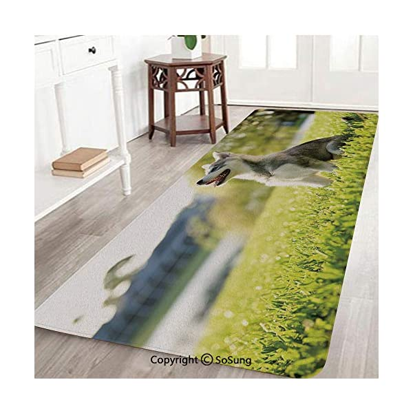 Alaskan Malamute Rug Runner,Klee Kai Puppy Sitting on Grass Looking Up Friendly Young Cute Animal Decorative,for Living Room Bedroom Dining Room,6'x 2',Multicolor 2