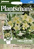 johnsons seeds - Pictorial Pack - Fiore - Elleboro Christmas Rosa - 50 Semi
