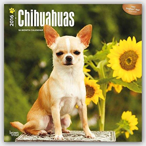 Chihuahuas 2016 Square 12x12 (Multilingual Edition)