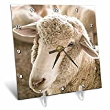 3dRose Danita Delimont - Sheep - Window Rock, Arizona. 4H competition at the Navajo Nation Fair. - 6x6 Desk Clock (dc_278459_1)