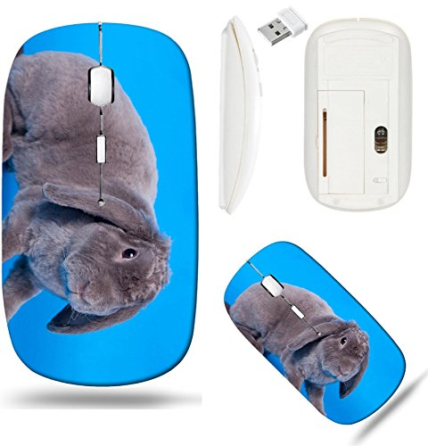 Liili Wireless Mouse White Base Travel 2.4G Wireless Mice with USB Receiver, Click with 1000 DPI for notebook, pc, laptop, computer, mac book ID: 29540828 Grey lop eared rabbit rex breed on blue