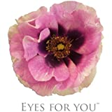 Persische-Rose`Eyes for You®´