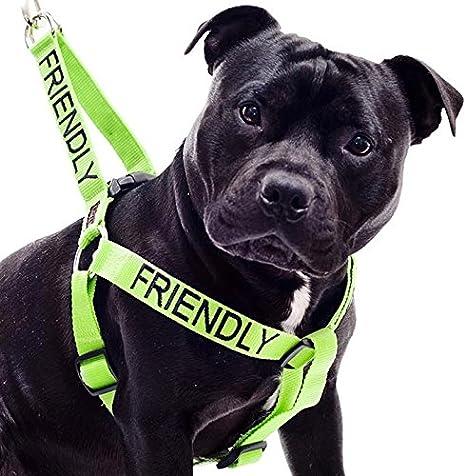 Dexil Limited Arnés antitirones para Perro con código de Color ...