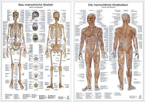 Doppelpack Anatomie-Poster: Jeweils ein Poster Skelett und ...