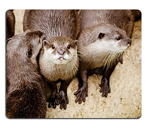 liili-mouse-pad-natural-rubber-mousepad-asian-small-otters-photo-1950845