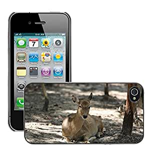 Just Phone Cover Etui Housse Coque de Protection Cover Rigide pour // M00138976 Ciervo Zoo Naturaleza Animales Fauna y // Apple iPhone 4 4S 4G