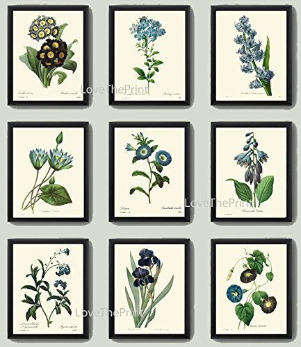 Botanical Print Set of 9 Antique Beautiful Redoute Blue Flowers Iris Water Lily Plumbaqgo Primula Gentian Butterfly Plants French Garden Nature Home Room Decor Wall Art (Beautiful French Poster)