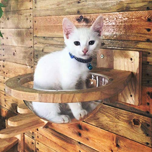 Amazon.com: TINTON LIFE - Cápsulas de madera para gato para ...