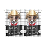 your-fantasia Mugshot of a Mexican Very Bad Dog Window Curtain Kitchen Curtain Two Pieces 26 x 39 inches