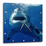 3dRose dpp_10584_1 Wall Clock, Great White Shark, 10 by 10-Inch Review