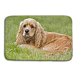 zexuandiy Area Rug Carpet Non-Slip Floor Mat Doormats for Living Room Bedroom 24 x 16 inch American Cocker Spaniel Cooker Female Resting Grass Portrait 45