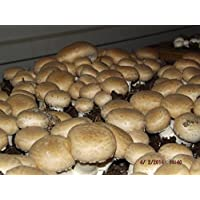 Crimini ~ Portabella ~ Baby Bella Mushroom Growing Kit makes it EASY to grow your own FRESH Mushrooms!