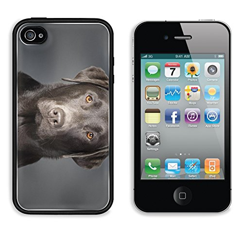 iPhone 4 iPhone 4S Aluminum Backplate Bumper Snap Case IMAGE ID: 4852967 Shot of a Proud Chocolate Labrador