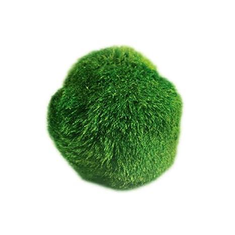 UEETEK Bola de musgo Planta para acuario DIY jardín decoración del hogar