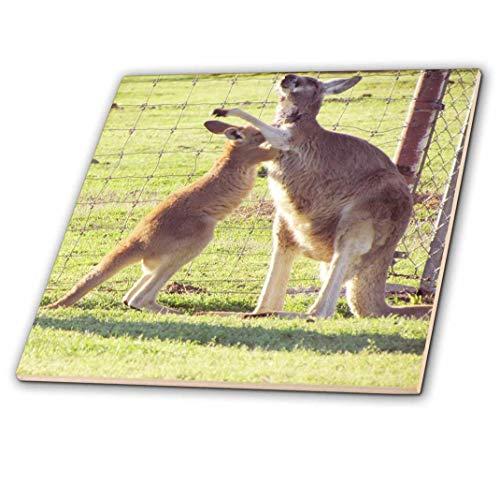 3dRose ct_195200_4 Red Kangaroos Ceramic Tile, 12