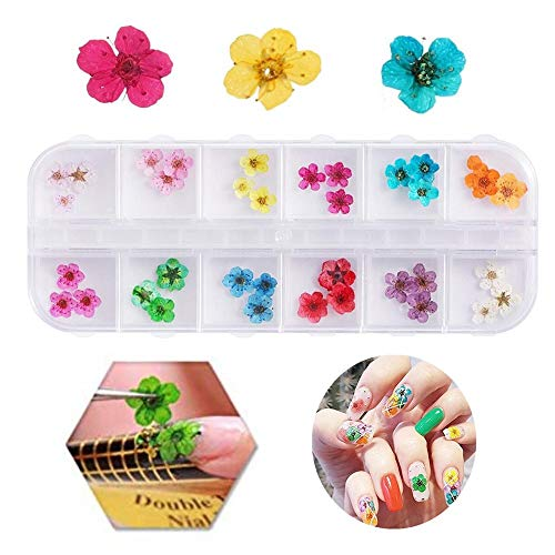 Valuu 3D Nail Art Dried Flowers Sticker 12 Colors Natural Real Dry Flower Nail Art Decoration Lovely Five Petal Flower Beauty Nail Stickers for 3D Nail Art Acrylic UV Gel Tips