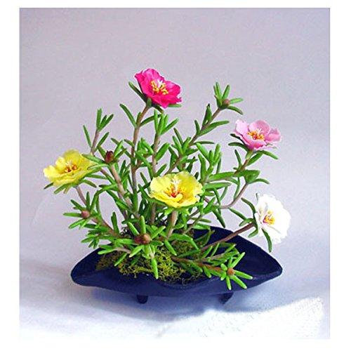Creative Farmer Flower Seeds : Portulaca Grandiflora Double Mix...