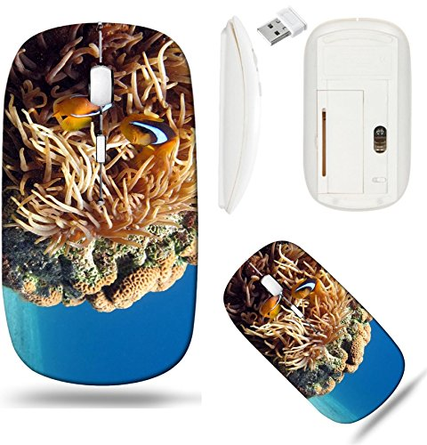 Liili Wireless Mouse White Base Travel 2.4G Wireless Mice with USB Receiver, Click with 1000 DPI for notebook, pc, laptop, computer, mac book IMAGE ID: 1065460 Clownfish and Sea Anemone shot in the Re