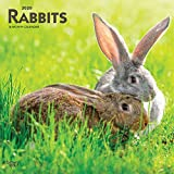 Rabbits 2020 12 x 12 Inch Monthly Square Wall Calendar, Domestic Pet Animals