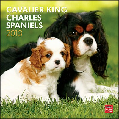 Spaniel 2013 Calendar - 2013 Calendar Cavalier King Charles Spaniels 2013 Wall Calendar