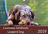 Louisiana Catahoula Leopard Dog - Catahoula Kalender 2016 (Wall Calendar 2019, 14 Pages, Size DIN A3 = 11.7 x 16.5 inches)