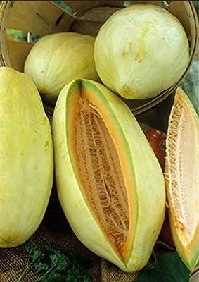 50 Banana Cantaloupe Seeds