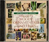 Diseases of Woody Ornamentals and Trees, , 0890543070