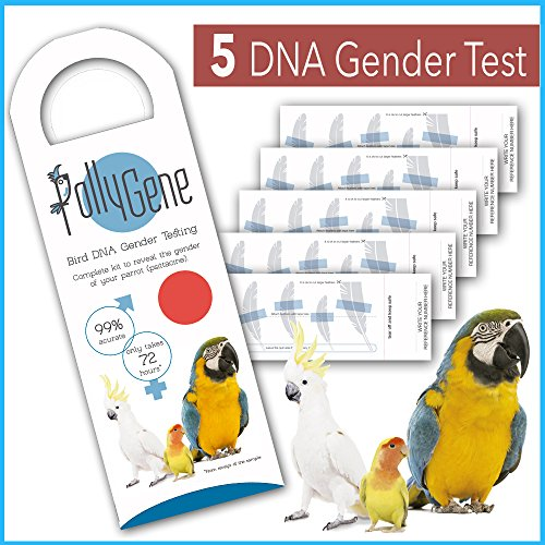 5 Bird Sexing DNA Sample Collection Kits. Gender reveal Tests for Parrots, Lovebirds, Cockatoos, African Grey (+300 Psittacines) Avian Sexing DNA Testing Sample Collection Kit - Certificate Included by Pollygene Ltd