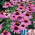 "100 Seed (Long Bloom Period) Magnus Purple Coneflower""Heirloom Non-GMO"""