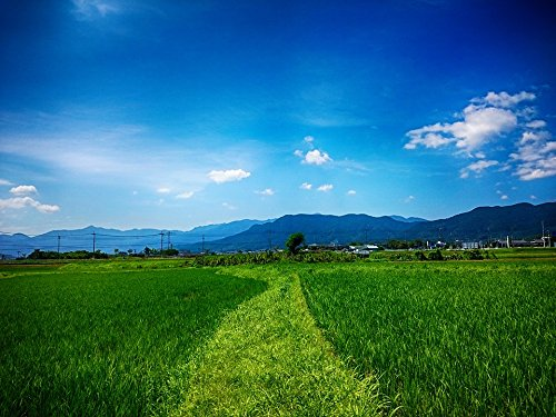 (Home Comforts Peel-n-Stick Poster of Yamada's Rice Fields Tanaka The Countryside Poster 24x16 Adhesive Sticker Poster Print)
