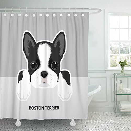 TOMPOP Shower Curtain Face Portrait of Boston Terrier Puppy Dog Cute Bulldog Waterproof Polyester Fabric 72 x 72 Inches Set with Hooks