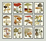 good will hunting edited - Mushroom Print Set of 12 Antique Botanical Beautiful Red Brown Beige Natural Colored Mushrooms Forest Nature Kitchen Dining Home Room Decor Wall Art Unframed EAP