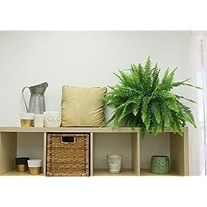Costa Farms WaterWick Self-Watering Heart Design Planter w/ Premium Exotic Angel Live Indoor Love Fern Plant 3