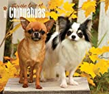 For the Love of Chihuahuas dogs Wall Calendar 2018 {jg} Best Holiday Gift Ideas - Great for mom, dad, sister, brother, grandparents, , grandchildren, grandma, gay, lgbtq.