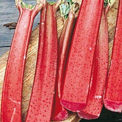 Rhubarb Valentine Rheum Rhabarbarum Super Heavy