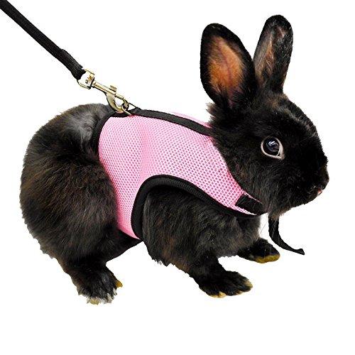 guinea pig in a dress - 9