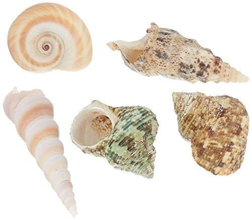 Sea Shell Mixes 10/Pkg-Natural