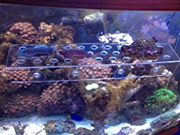 X-Large Clear Frag Rack For Corals and Frag Plugs Holding 32 frag Plugs