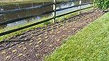 Zoysia Plugs - 100 Large Plugs, Drought