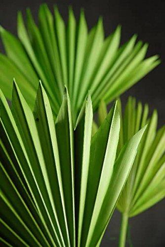Richland Natural Palm Leaf Fans Leaves Set of 5]()