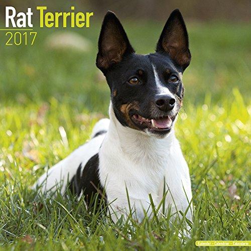 Dog Breeds 2017 (Vintage, Z Rat Terrier Calendar 2017)