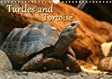 Turtles and Tortoise / UK-Version 2018: Beautiful Photos of Turtles on Land and Water (Calvendo Animals)