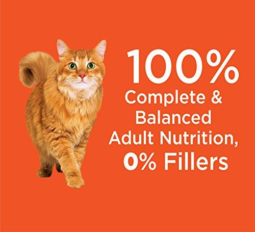 شراء Iams Proactive Health Original Adult Dry Cat Food
