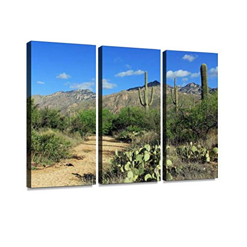 Hiking Trail in Bear Canyon in Tucson, AZ Print On Canvas Wall Artwork Modern Photography Home Decor Unique Pattern Stretched and Framed 3 Piece